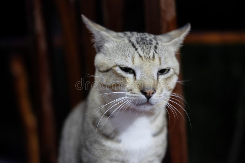 Cat Squinting an der Front stockbilder