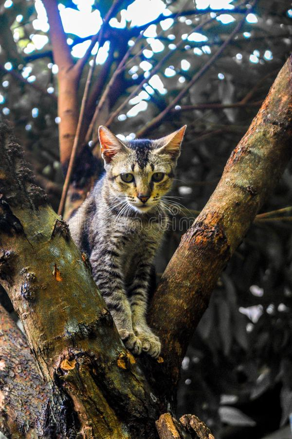 Cat - Sri Lanka. The cat is a small carnivorous mammal. It is the only domesticated species in the family Felidae and often referred to as the domestic cat to stock photo