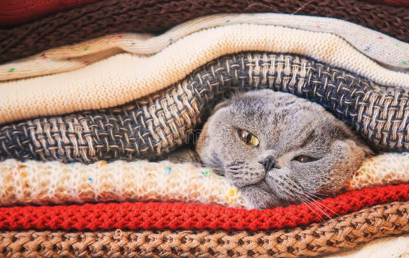 Cat in a stack of warm clothes. Selective focus. Nature stock photo