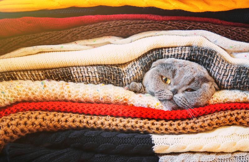 Cat in a stack of warm clothes. Selective focus. Nature royalty free stock photo