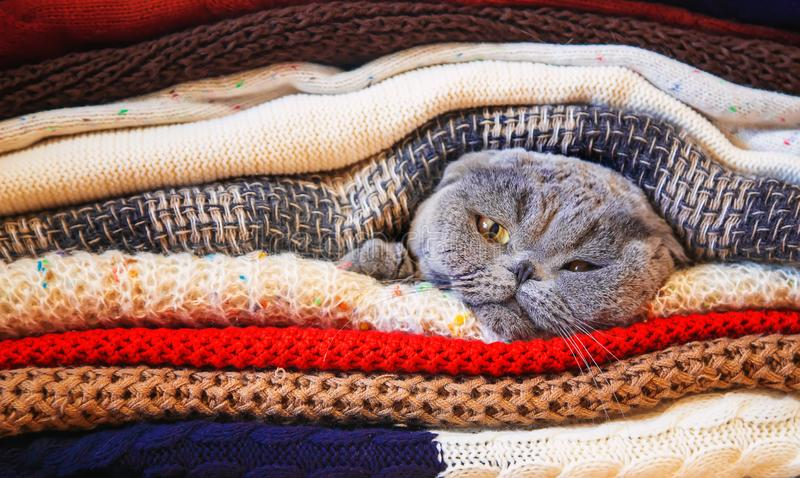 Cat in a stack of warm clothes. Selective focus. Nature royalty free stock photography