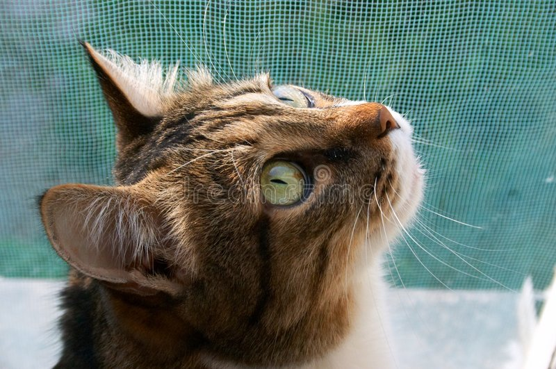Download Cat stand sentinel stock image. Image of sunny, intently - 155463
