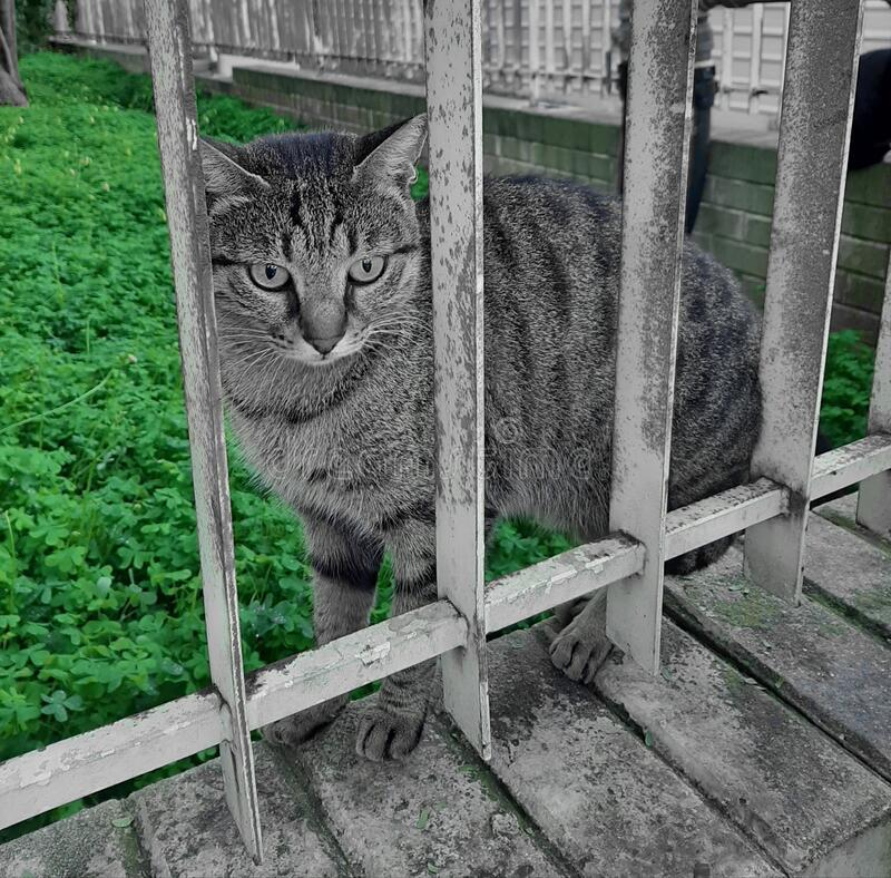 A cat standing over the iron fenceand thinking. A cat standing over the fence royalty free stock photos