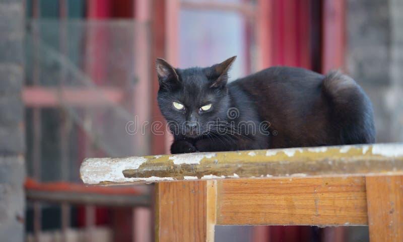 Cat Star stockbild