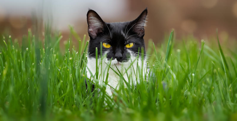 Cat stare royalty free stock photos