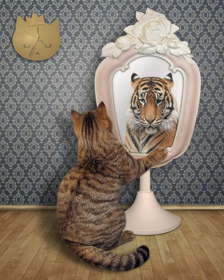 Cat stares his reflection. The cat stares his reflection in the mirror in the room. This is a tiger stock photo
