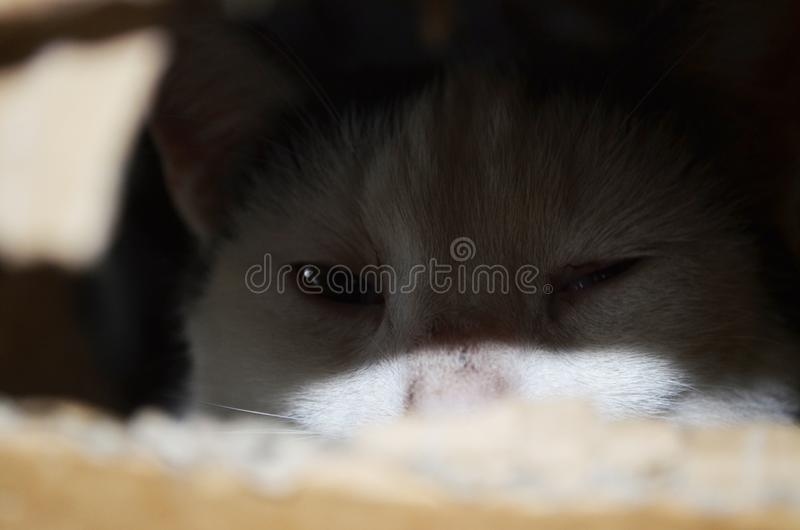 Cat stares through a hole in paper stock photo
