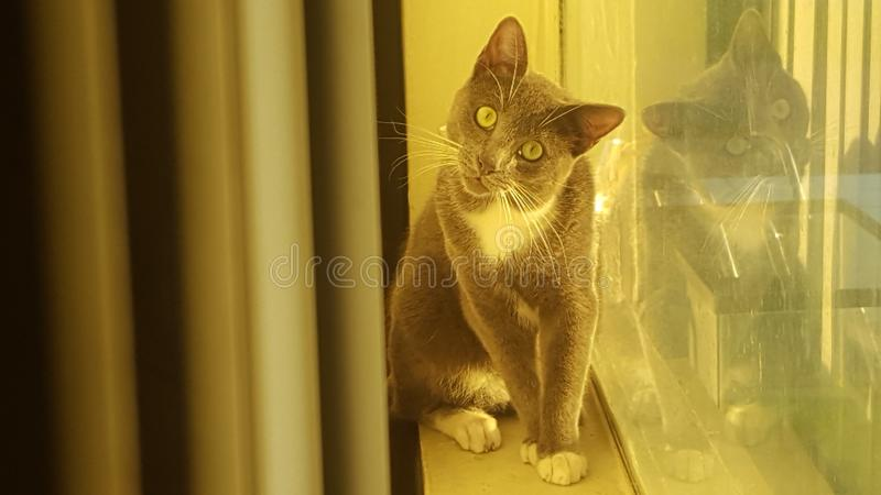 Cat Staring immagine stock