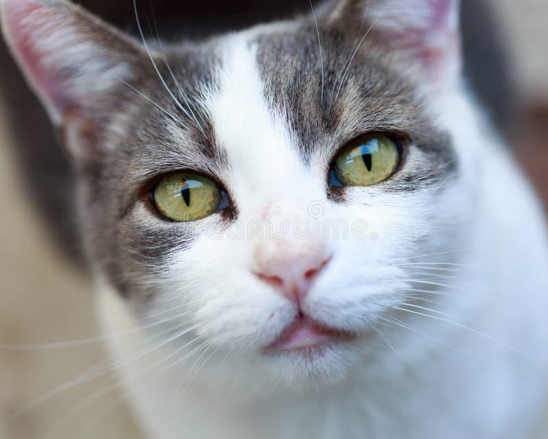 Cat Staring royalty-vrije stock afbeeldingen