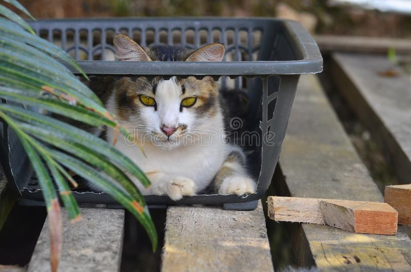 Cat staring behind the leaf. Looking, pet, animal, eyess, pair royalty free stock photo