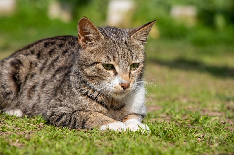 Cat Staring Intensely stock photos