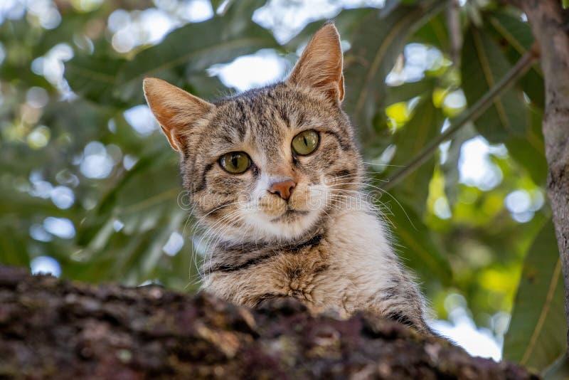 Cat Staring Intensely da árvore fotos de stock