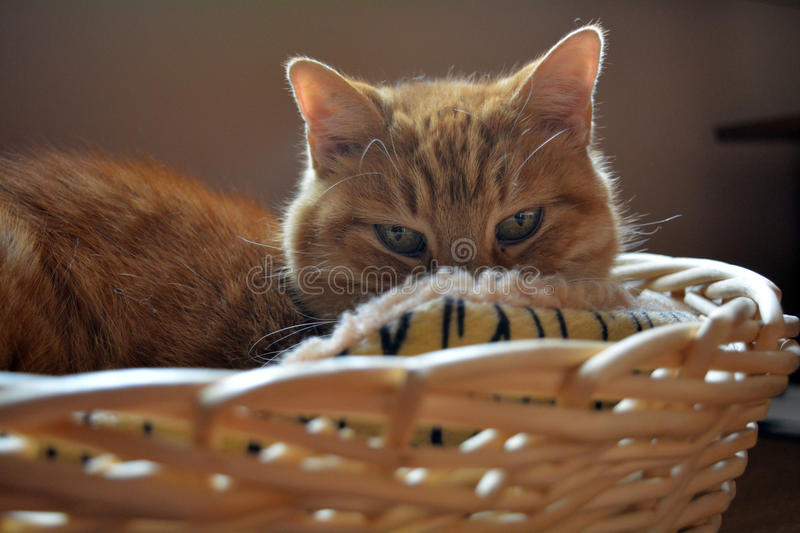 A cat staring at me stock image  Image of animal, family