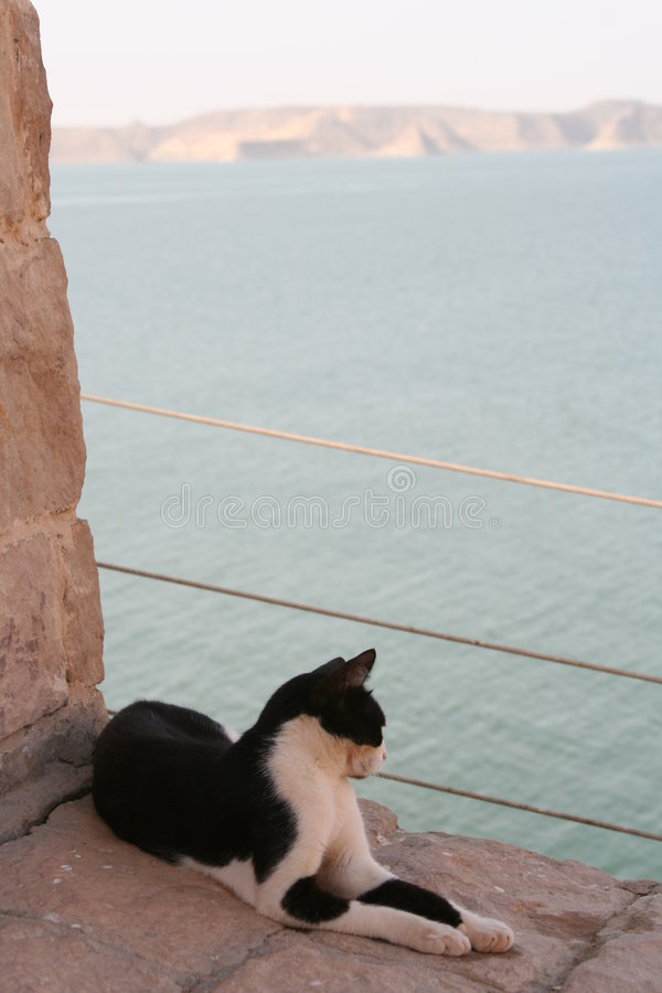Cat Staring At Red Sea stock photo