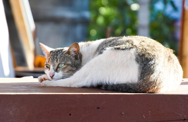 The cat is staring at something.lonely cat sitting on the ground royalty free stock photos