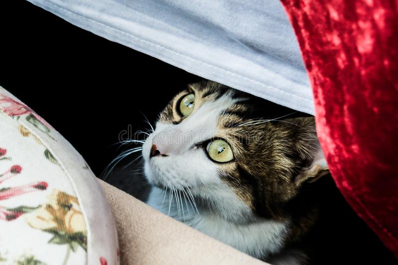 A cat is staring underneath a table stock images