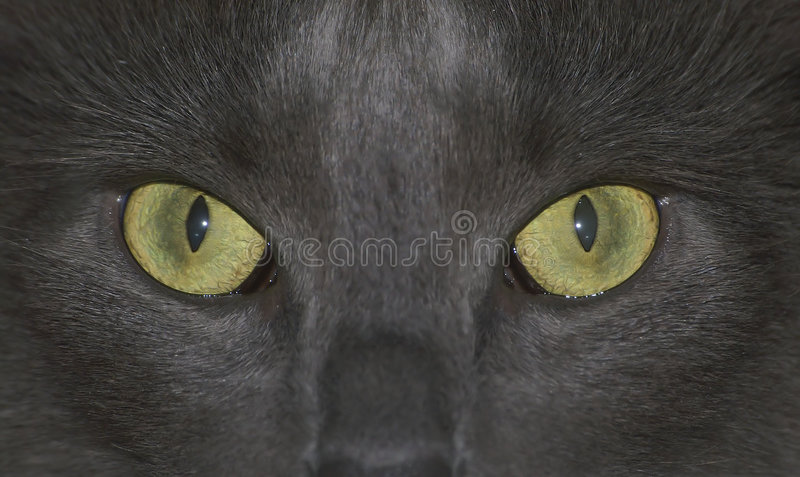 Cat is staring at you! royalty free stock photo