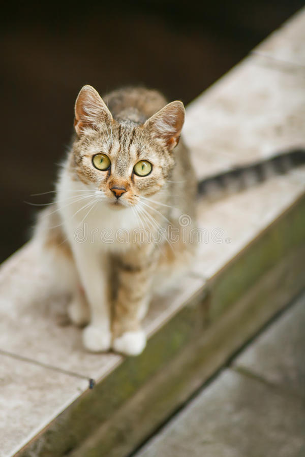 Download Cat staring at you stock photo. Image of feline, crouching - 25665756