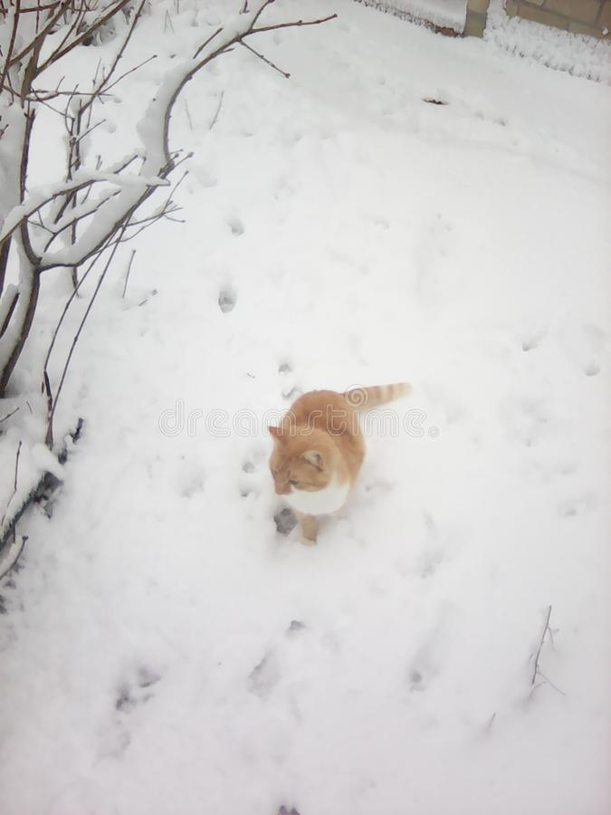 Cat stay on snow royalty free stock images
