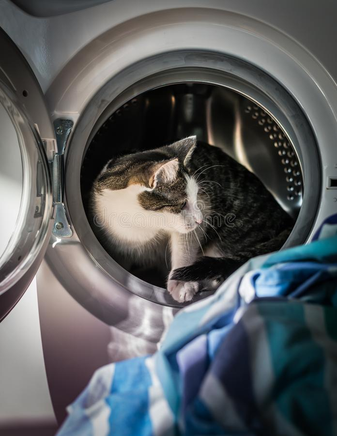 Cat stepping out of washing machine. Spooked cat escaping from an open washing machine - vertical royalty free stock photography