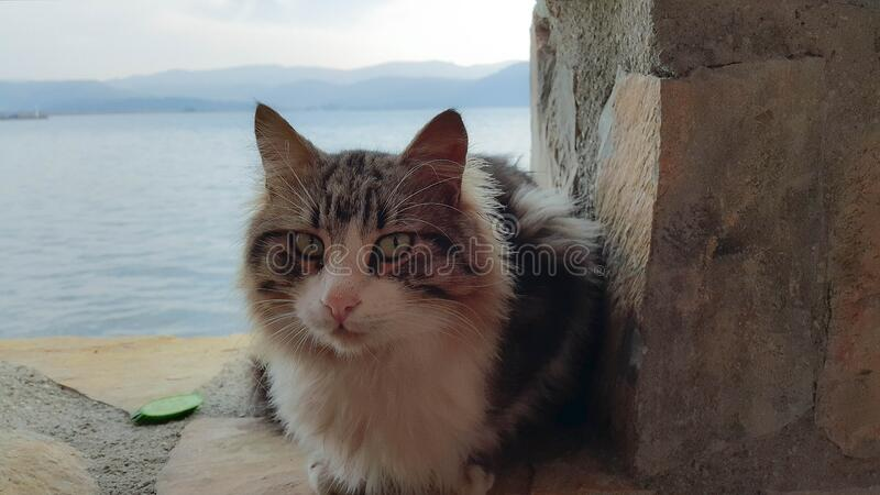 Cat on stone wall by sea royalty free stock images
