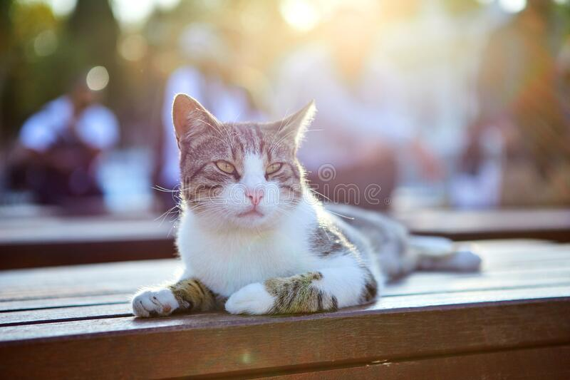 Cat on the street of Istanbul, Turkey. Cat on the street of Istanbul , Turkey royalty free stock photos