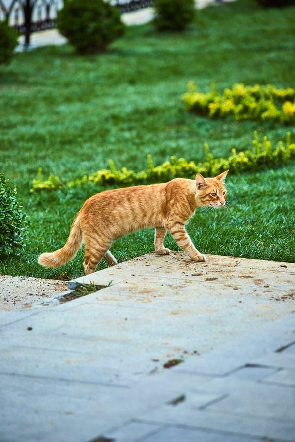 Cat on the street of Istanbul, Turkey. Cat on the street of Istanbul , Turkey stock photography