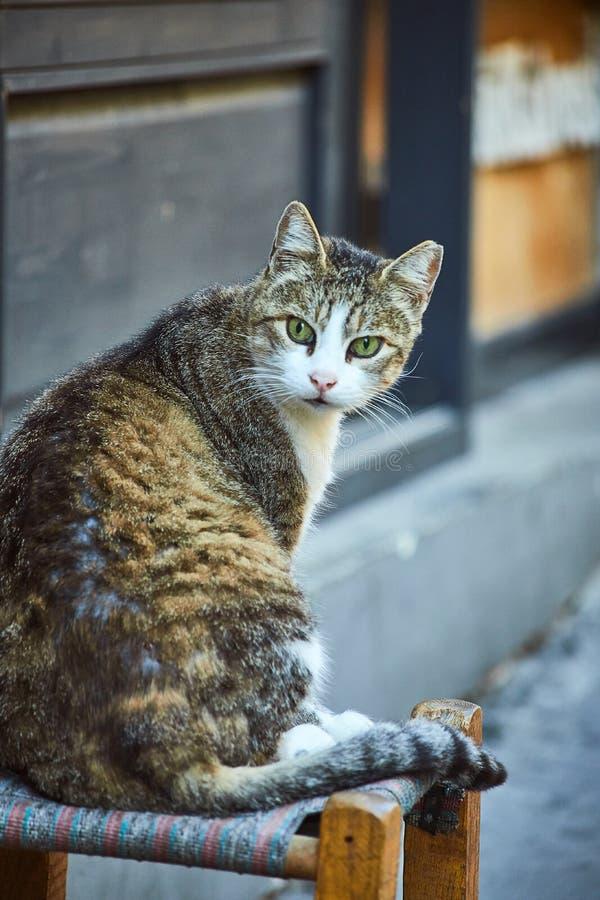 Cat on the street of Istanbul, Turkey. Cat on the street of Istanbul , Turkey royalty free stock photography