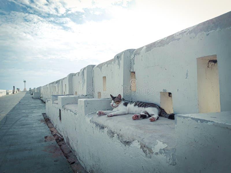 A cat on the street stock photos