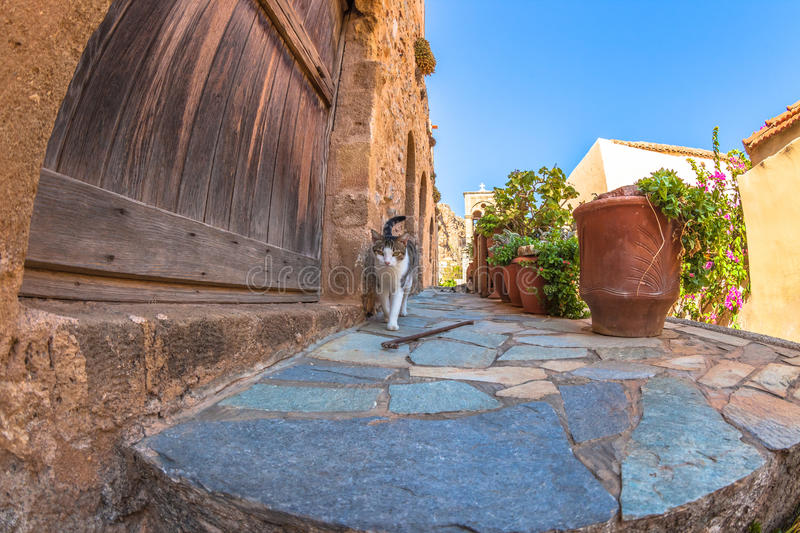 Cat street vision. A cat looking another stray cat from ground point view in a small alley of the Greek town Monemvasia
