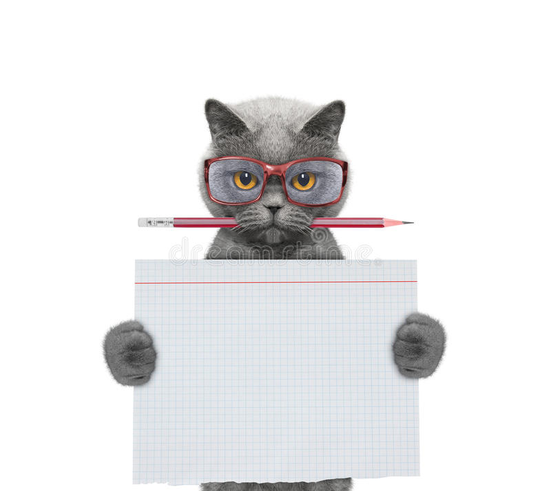 Cat studend at school holding piece of paper stock images