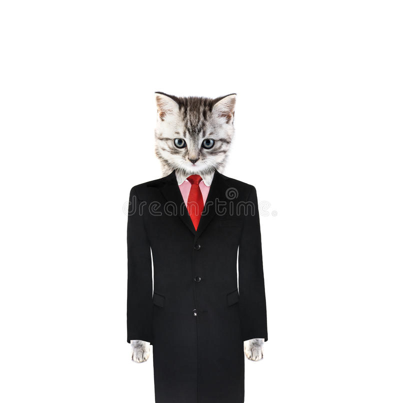 Download Cat in a suit stock photo. Image of official, background - 25378440