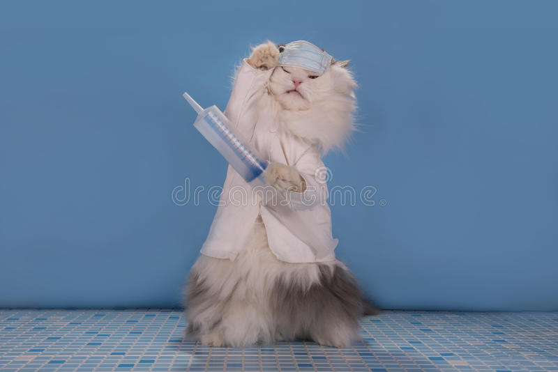 Cat in a suit doctor tells how to deal with the epidemic of influenza. Cat in a suit doctor tells how to deal with the epidemic of royalty free stock photo