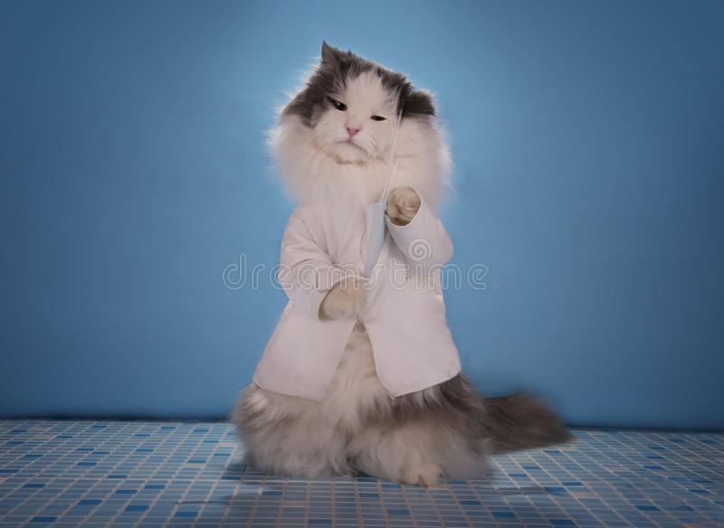 Cat in a suit doctor tells how to deal with the epidemic of influenza.  royalty free stock photography