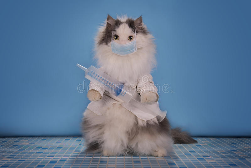 Cat in a suit doctor tells how to deal with the epidemic of influenza.  stock images