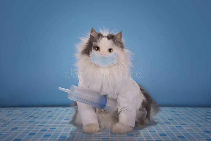 Cat in a suit doctor tells how to deal with the epidemic of influenza.  stock photography