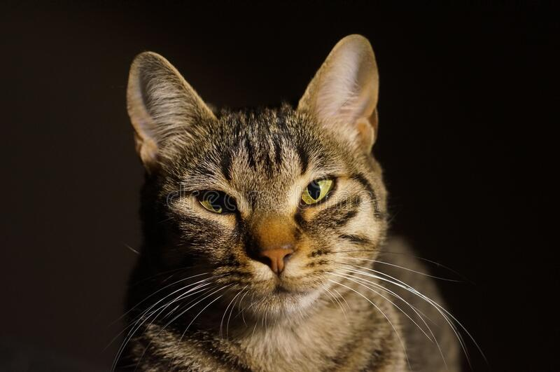 Cat in sun royalty free stock photography
