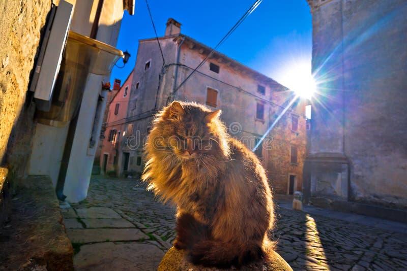 Cat on sun rays on street of Groznjan village. Istria region of Croatia stock photos
