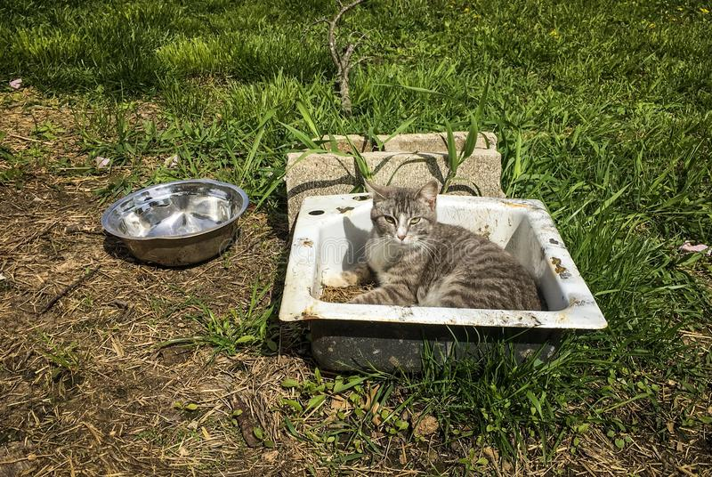 Cat sunbathing. A cat sunbathing in a sink laying in a field stock photos