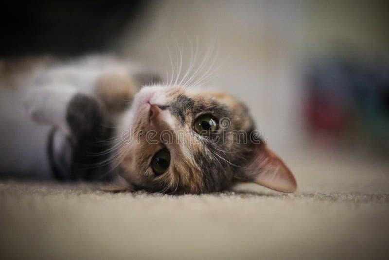 Cat Sunday stock photos