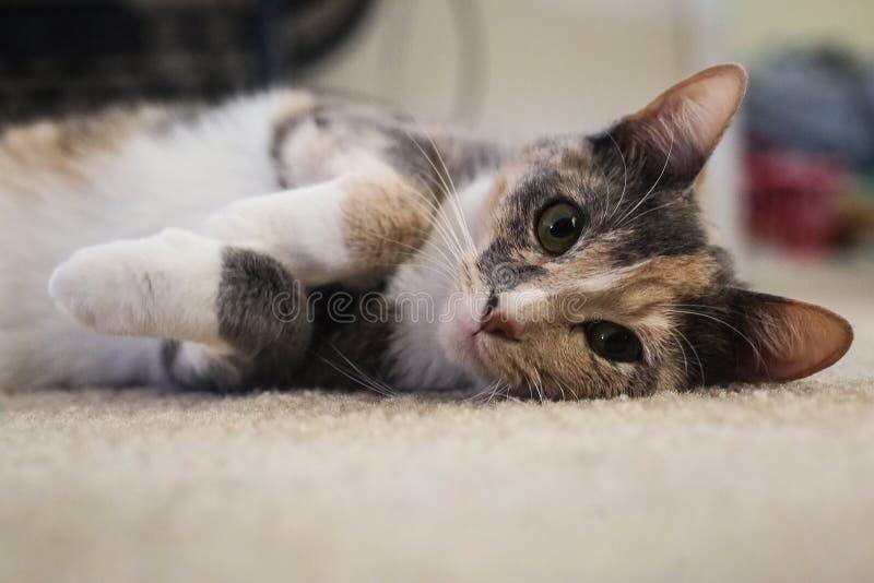 Cat Sunday royalty free stock image