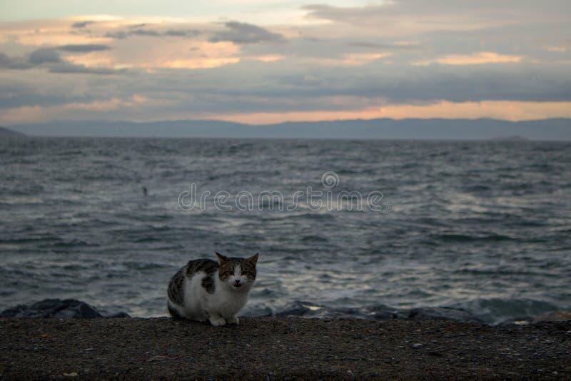 Cat And Sunset royaltyfri bild