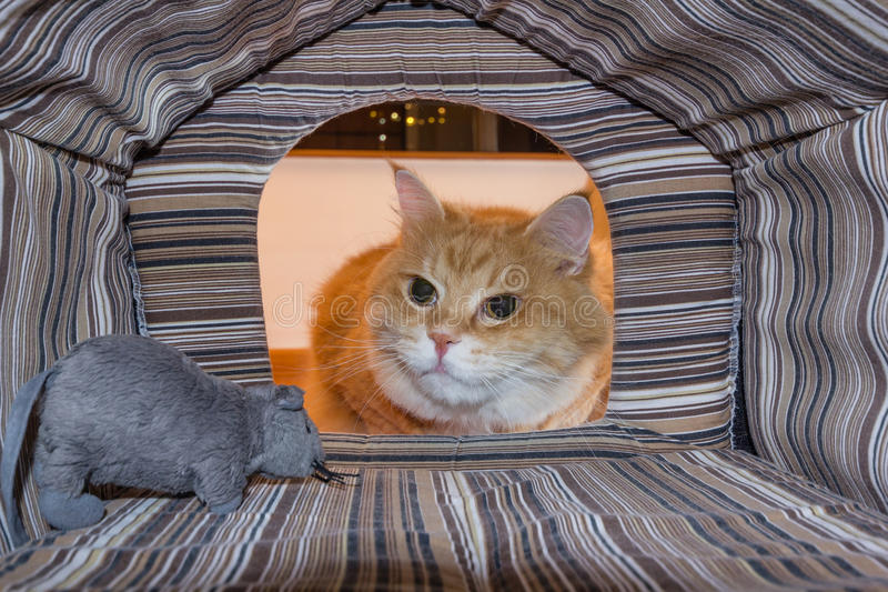 Cat surprised by his mouse toy royalty free stock photography