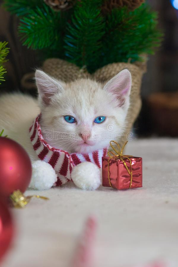 Cat symbol of the new year. Festive animals. Cat symbol of the new year. Kitten with Christmas toys on the background of the Christmas tree. Festive animals royalty free stock photography