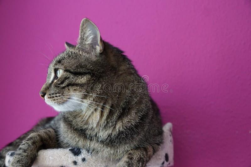 Cat, Tabby Cat, Dragon Li, Whiskers Free Public Domain Cc0 Image