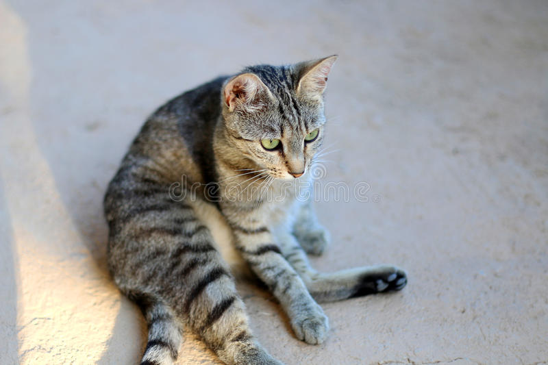 Cat. Tabby cat sitting outdoor in a funny pose. Selective focus stock photo