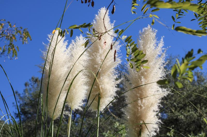 Cat Tails in de Wind royalty-vrije stock afbeelding