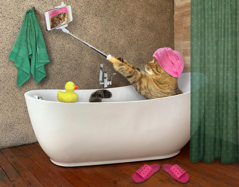 Cat takes bath with phone. The beige cat with a pink towel around his head is taking a bath. It holds a selfie stick with a smartphone stock photography