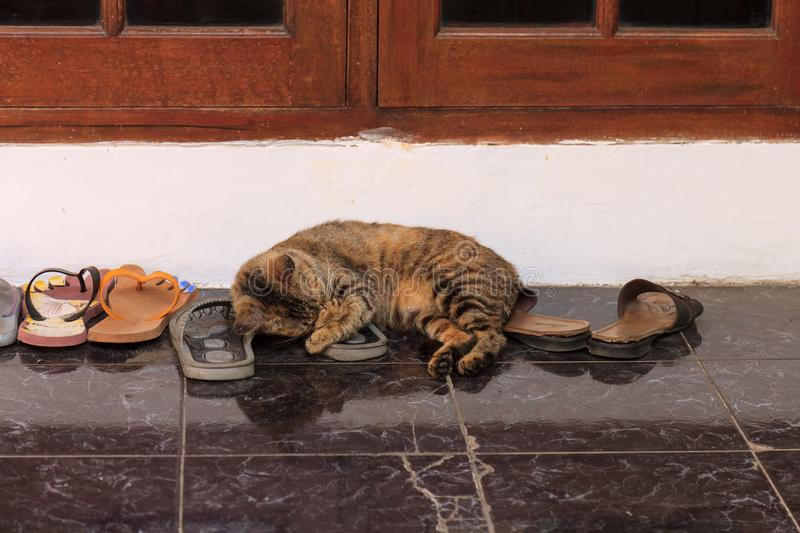 Cat taking a nap on flip flops royalty free stock image