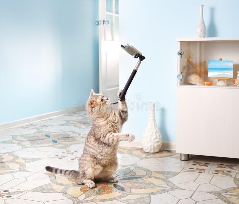 Cat Taking Selfie arkivbild